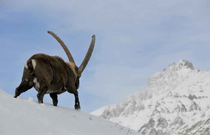 Aosta gran paradiso 700x450